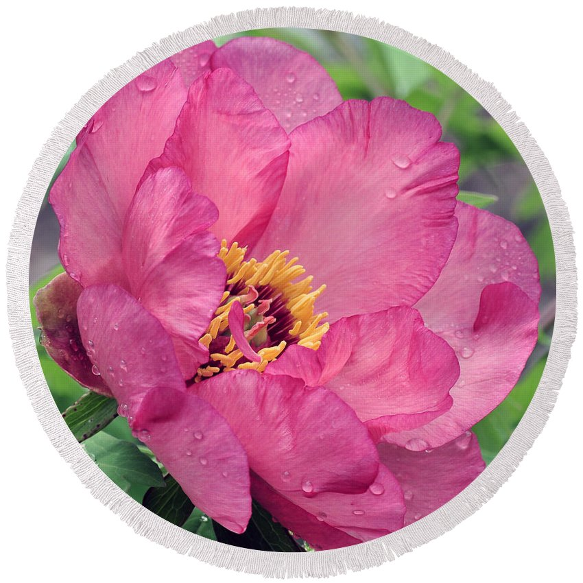 Peonies Round Beach Towel featuring the photograph Peony 28 by Terri Winkler