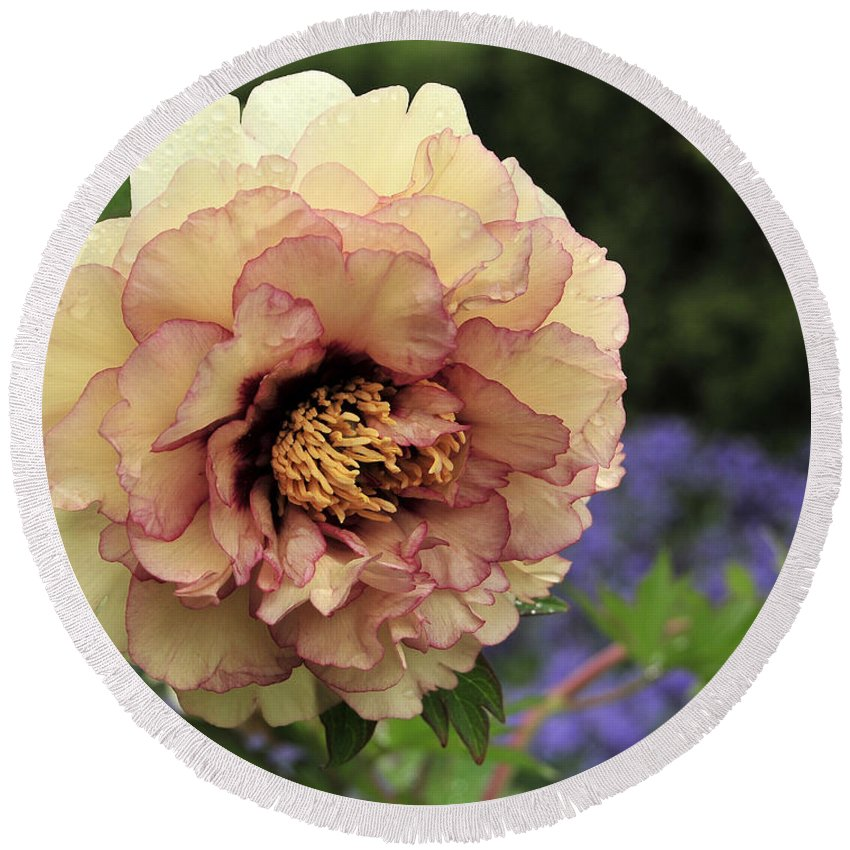 Peonies Round Beach Towel featuring the photograph Peony 29 by Terri Winkler
