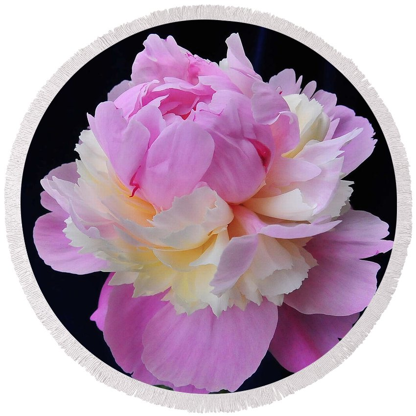 Peonies Round Beach Towel featuring the photograph peony 4 Double Light Pink Peony II by Terri Winkler