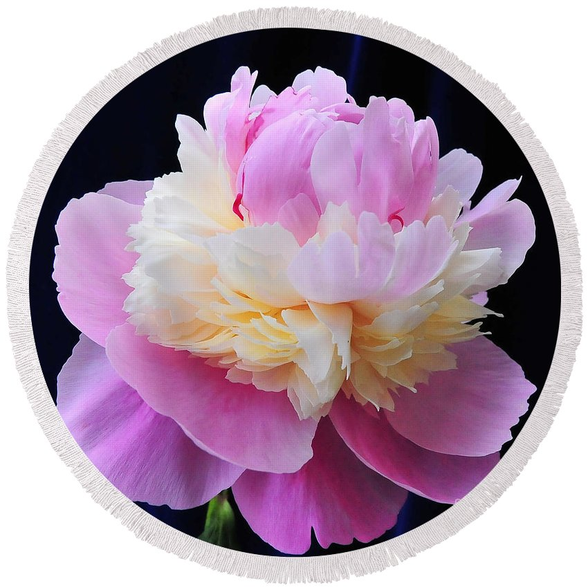 Peonies Round Beach Towel featuring the photograph peony 5 Double Light Pink Peony III by Terri Winkler