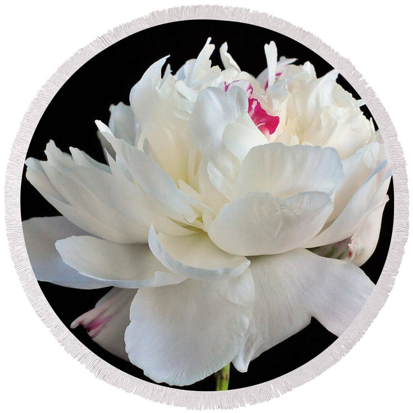 Peonies Round Beach Towel featuring the photograph peony 6 Double White Peony I by Terri Winkler