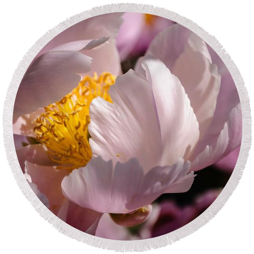 Flower Round Beach Towel featuring the photograph Peony Bride by Ken Foster