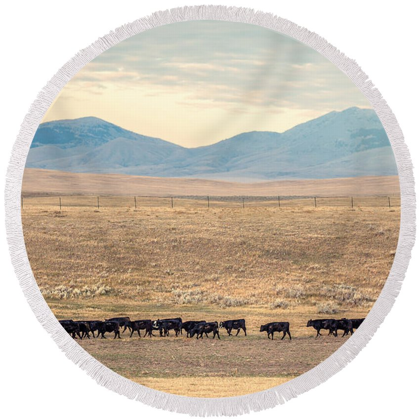 Cattle Round Beach Towel featuring the photograph People's Creek Push by Todd Klassy