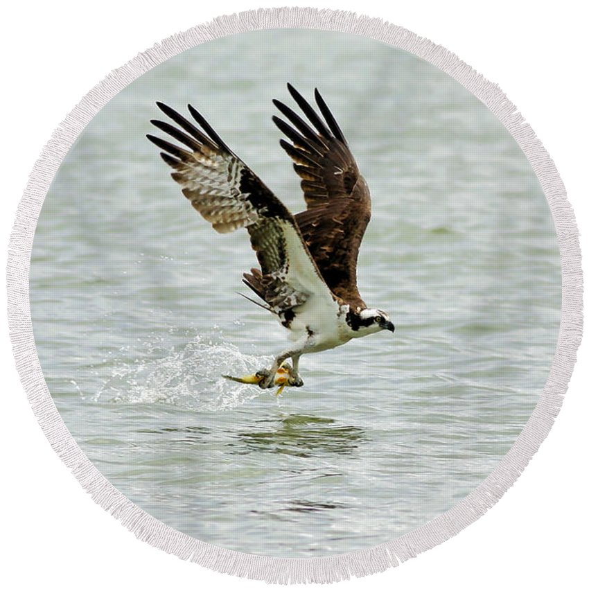 Osprey Round Beach Towel featuring the photograph Perch On The Run by Deborah Benoit