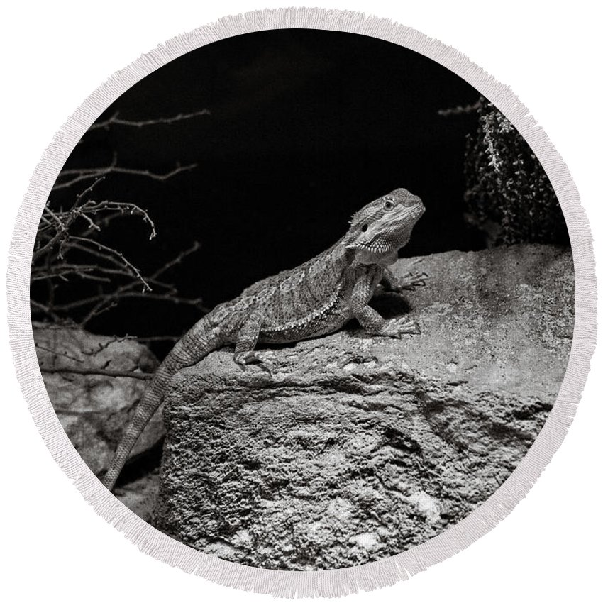 Lizard Round Beach Towel featuring the photograph Perfectly Still by Marilyn Hunt