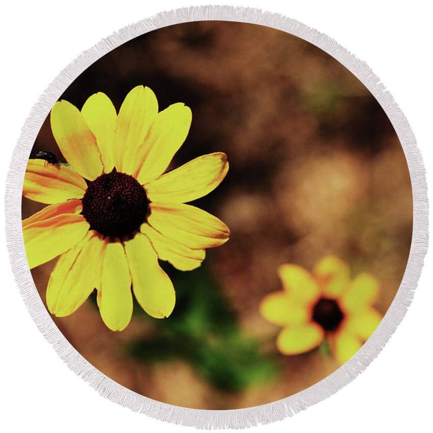 Sunflower Round Beach Towel featuring the photograph Petals Stretched by Kim Henderson