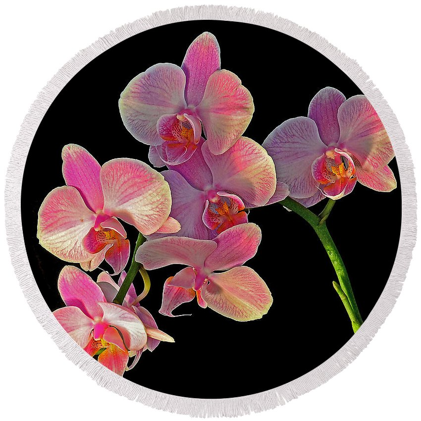 Orchid Round Beach Towel featuring the photograph Phalaenopsis Orchid by Rodney Campbell