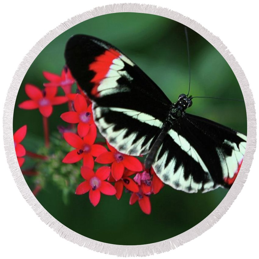 Butterfly Round Beach Towel featuring the photograph Piano Key Butterfly by Sabrina L Ryan