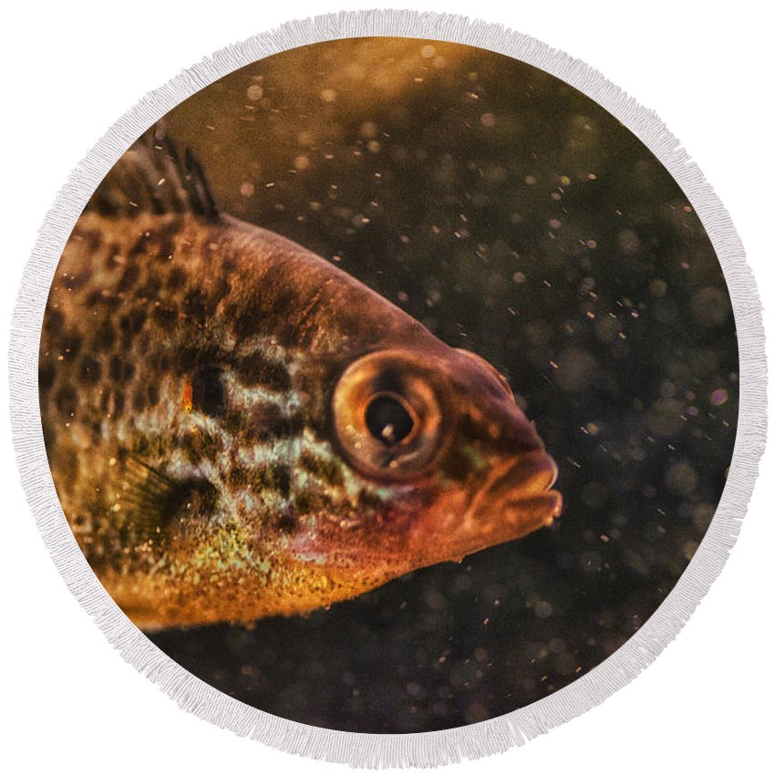 Fish Round Beach Towel featuring the photograph Pices In Aquarium by Susan Capuano