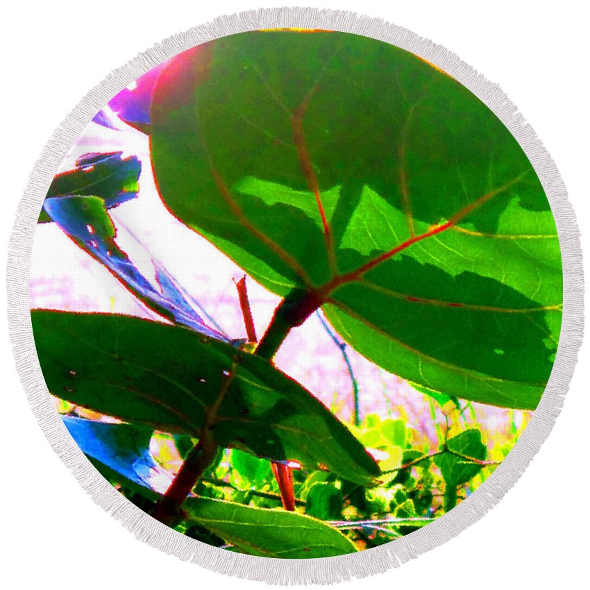 Sea Round Beach Towel featuring the photograph Piercing Sea Grapes by Ian MacDonald