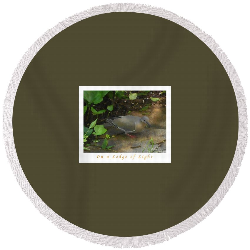 Single Pigeon Round Beach Towel featuring the photograph Pigeon Poster by Felipe Adan Lerma