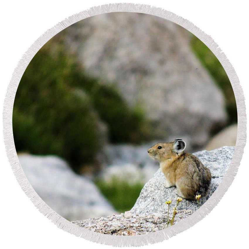 Animal Round Beach Towel featuring the photograph Pika Done by Grant Bolei