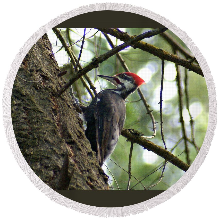 Spokane Round Beach Towel featuring the photograph Pileated Woodpecker by Ben Upham III