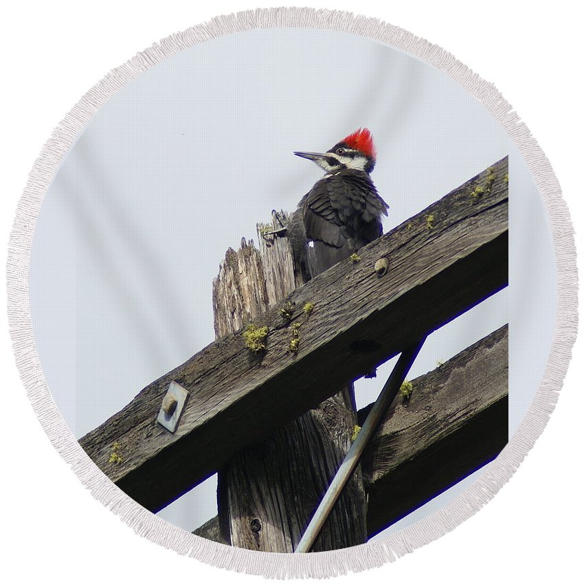 Birds Round Beach Towel featuring the photograph Pileated Woodpecker On A Power Pole by Ben Upham III