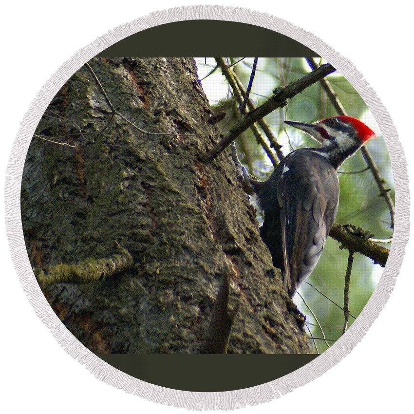 Birds Round Beach Towel featuring the photograph Pileated Woodpecker On A Tree In A Forest by Ben Upham III