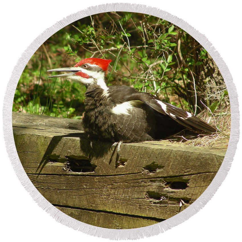 Faunagraphs Round Beach Towel featuring the photograph Pileated Woodpecker1 by Torie Tiffany