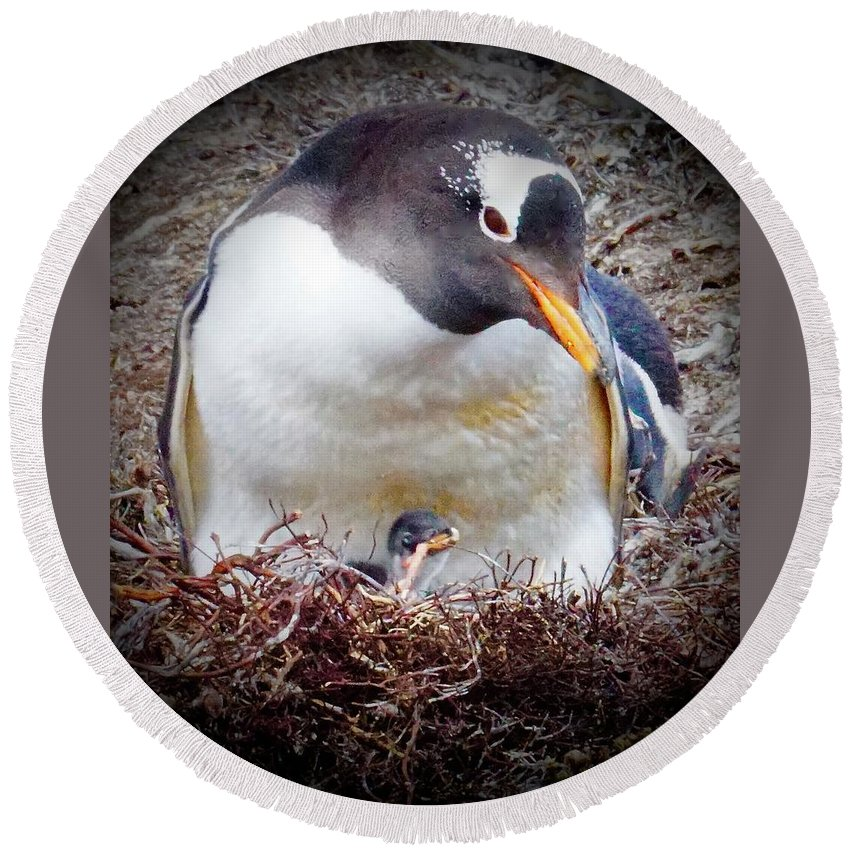 Round Beach Towel featuring the photograph Pillow Version by Tim G Ross