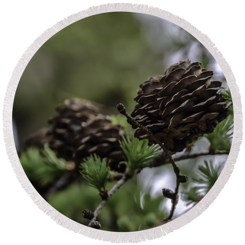Chris Coffee Round Beach Towel featuring the photograph Pine Cone by Chris Coffee