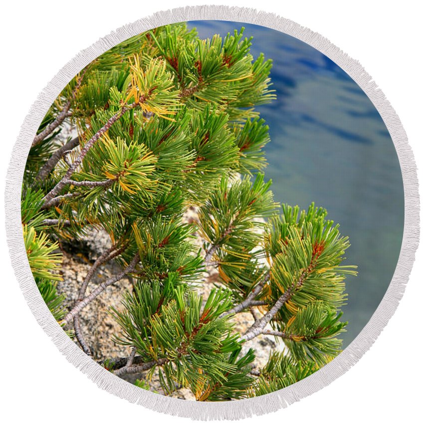 Pine Needles Round Beach Towel featuring the photograph Pine Needles Over Water by Chris Brannen