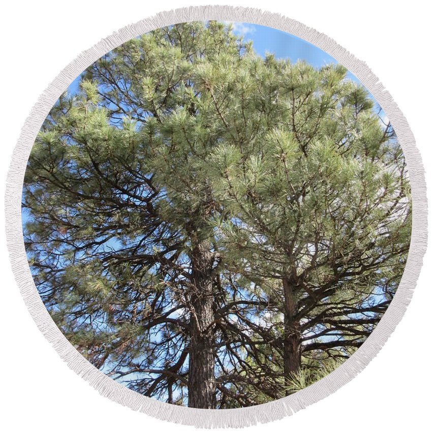 Pine Round Beach Towel featuring the photograph Pine Tree by Frederick Holiday