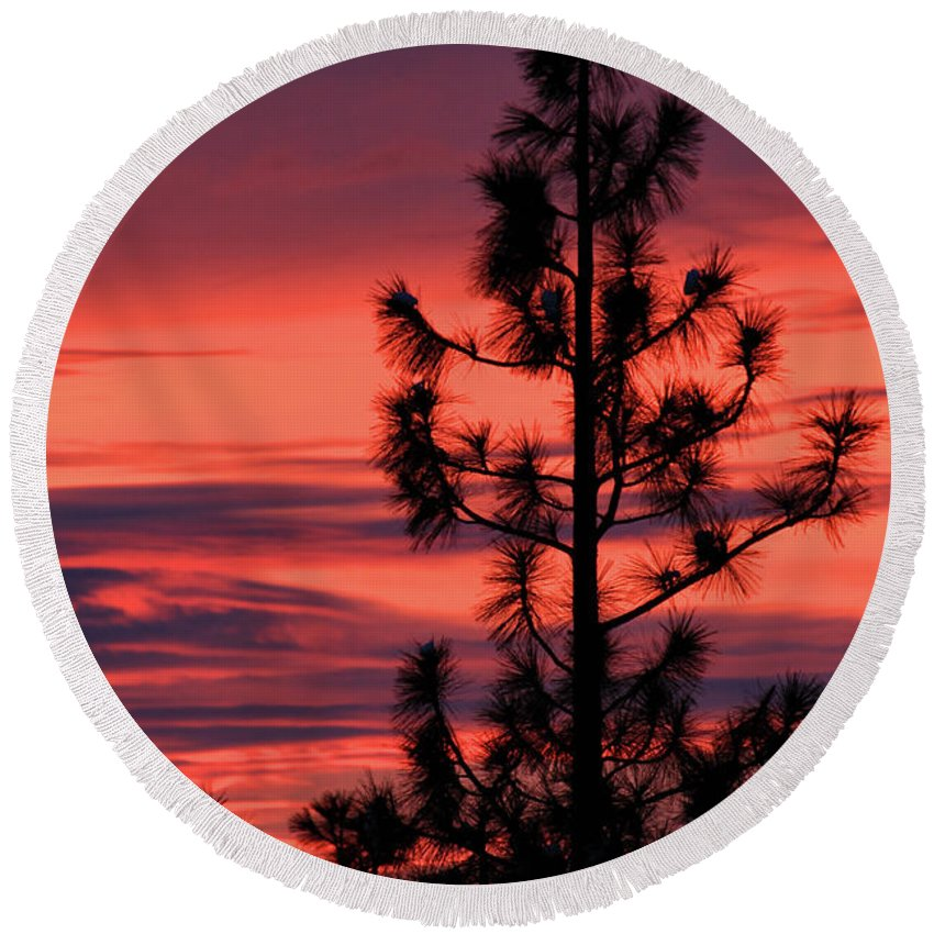 Branches Round Beach Towel featuring the photograph Pine Tree Sunrise by James Eddy