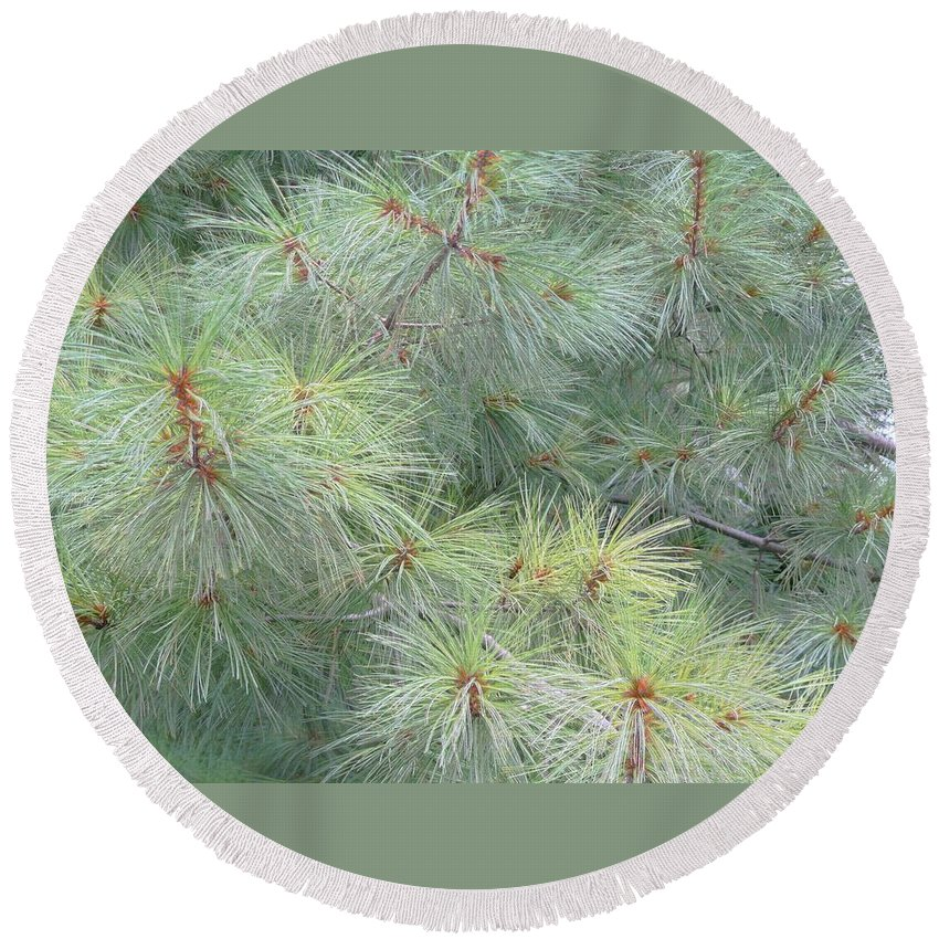 Pines Round Beach Towel featuring the photograph Pines by Rhonda Barrett