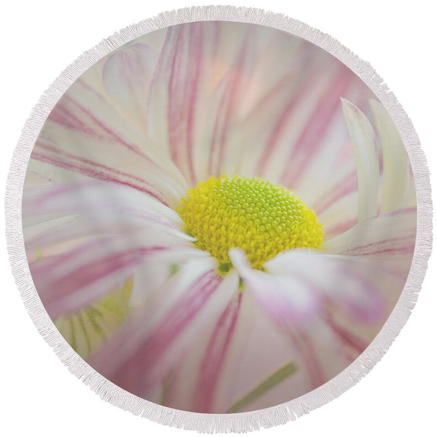 Mums Round Beach Towel featuring the photograph Pink And White by Darla Rae Norwood