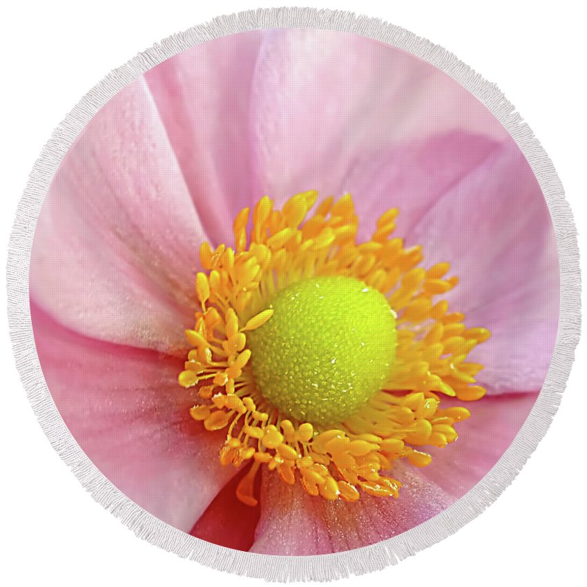 Photography Round Beach Towel featuring the photograph Pink Anemone by Kaye Menner