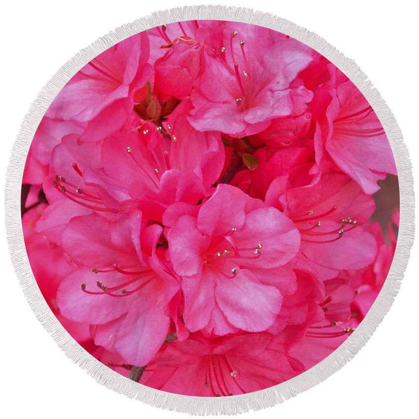 Pink Round Beach Towel featuring the photograph Pink Azalea Blooms 2 by Scenic Sights By Tara