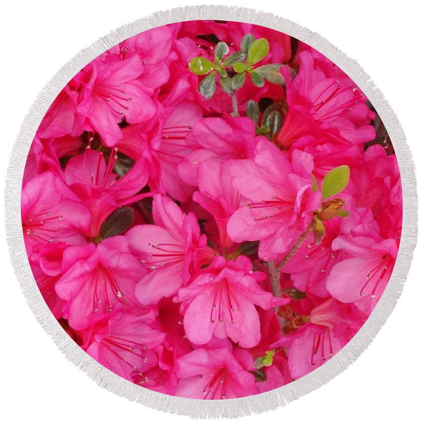Pink Round Beach Towel featuring the photograph Pink Azalea Blooms by Scenic Sights By Tara