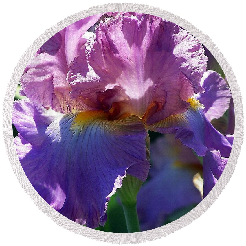 Pink Round Beach Towel featuring the photograph Pink Bearded Iris Photograph by Kimberly Walker