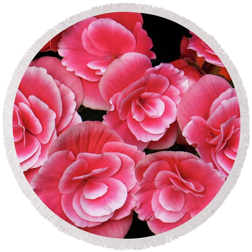 Begonias Round Beach Towel featuring the photograph Pink Begonias by Dave Mills