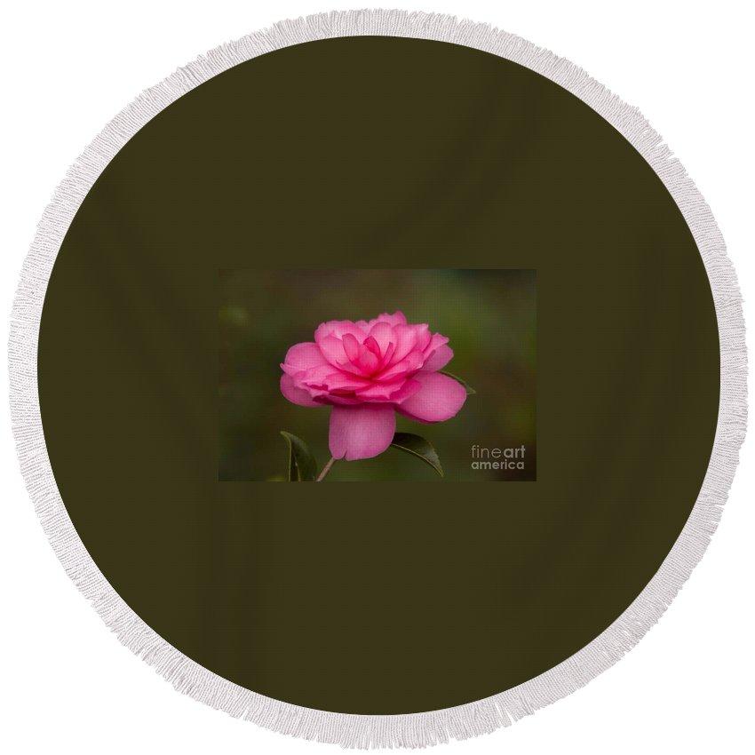 Camillea Round Beach Towel featuring the photograph Pink Camellia 3 by Marta Robin Gaughen