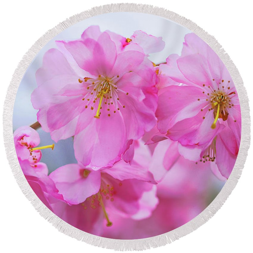 Cherry Blossoms Round Beach Towel featuring the photograph Pink Cherry Blossom Cluster by Regina Geoghan