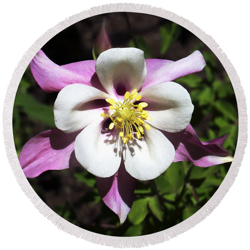 Columbine Round Beach Towel featuring the photograph Pink Columbine by Marilyn Hunt