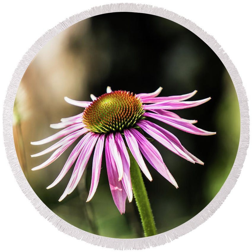 Pink Round Beach Towel featuring the photograph Pink Coneflower by Kevin Gladwell