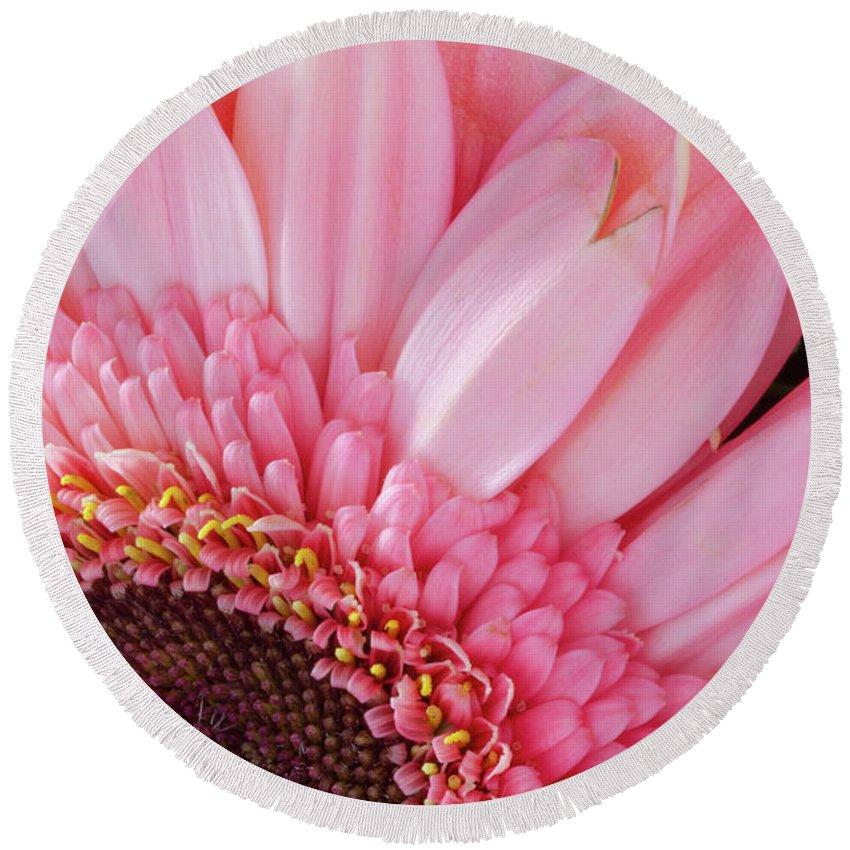 Flower Round Beach Towel featuring the photograph Pink Daisy Close-up by Iordanis Pallikaras