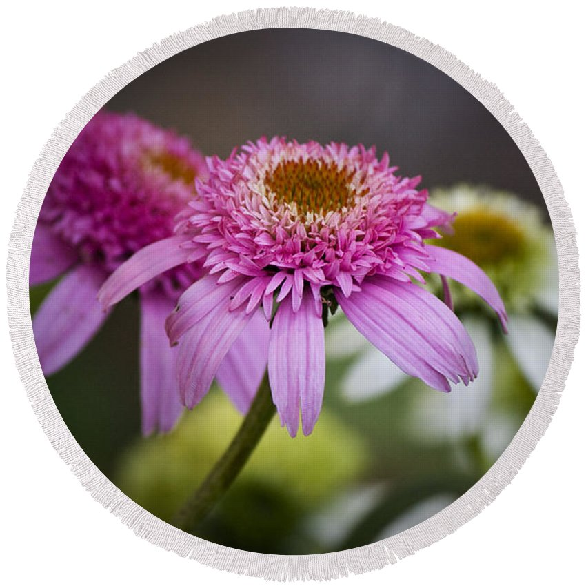 Pink Round Beach Towel featuring the photograph Pink Double Delight Coneflower by Teresa Mucha