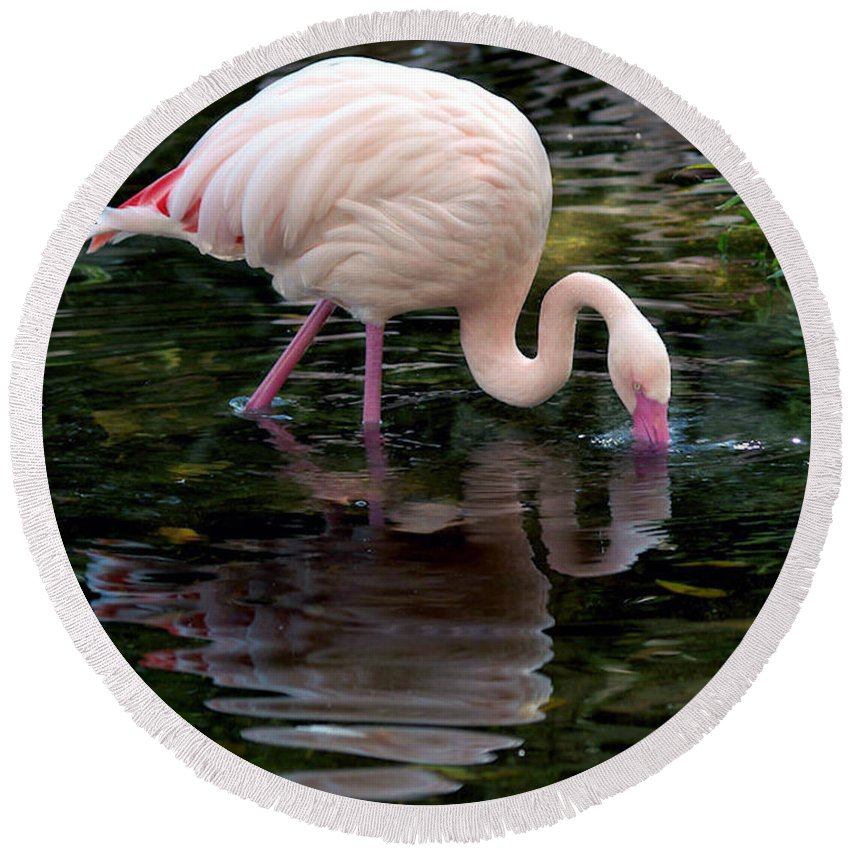 Bird Round Beach Towel featuring the photograph Pink Flamingo by Ken Frischkorn