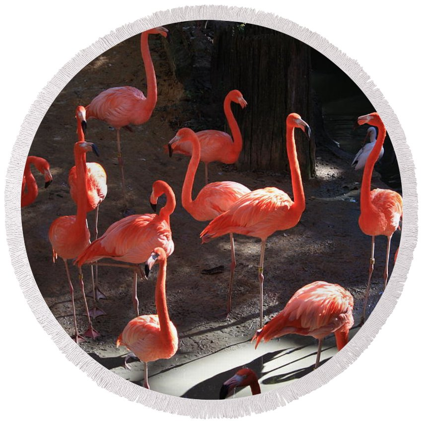 Pink Flamingos Round Beach Towel featuring the greeting card Pink Flamingos by Carol Groenen