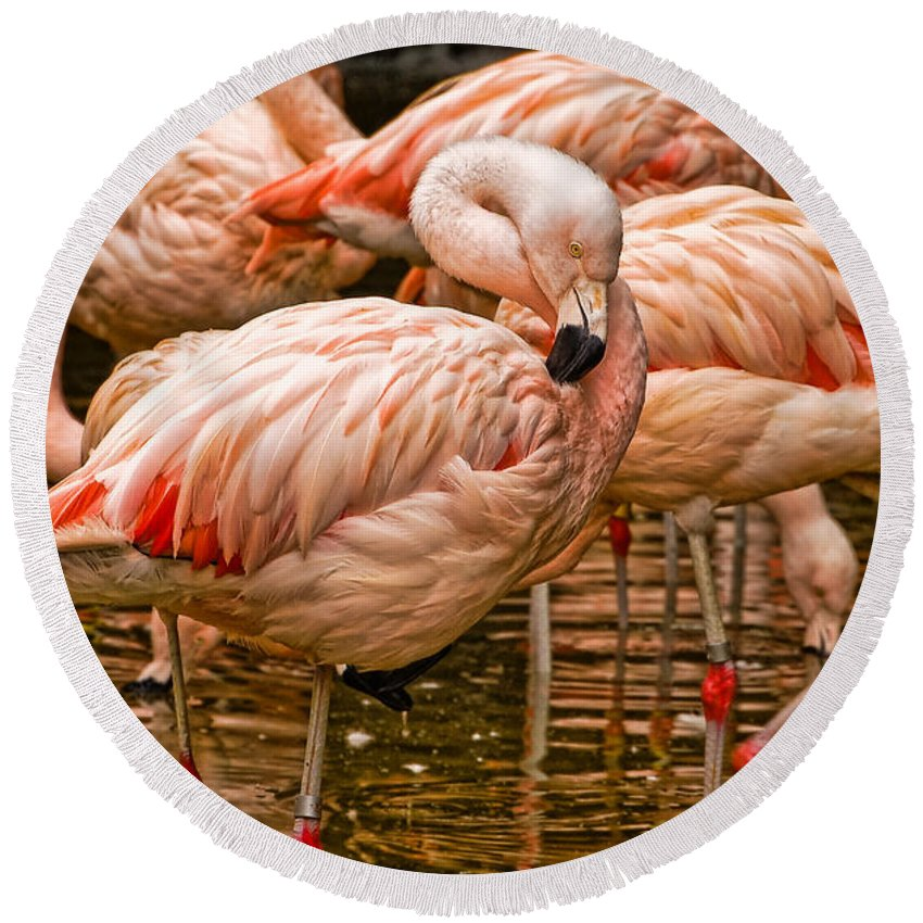 Birds Round Beach Towel featuring the photograph Pink Flamingos by Kathleen K Parker