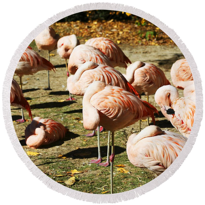Pink Flamingos Round Beach Towel featuring the photograph Pink Flamingos by Marilyn Hunt