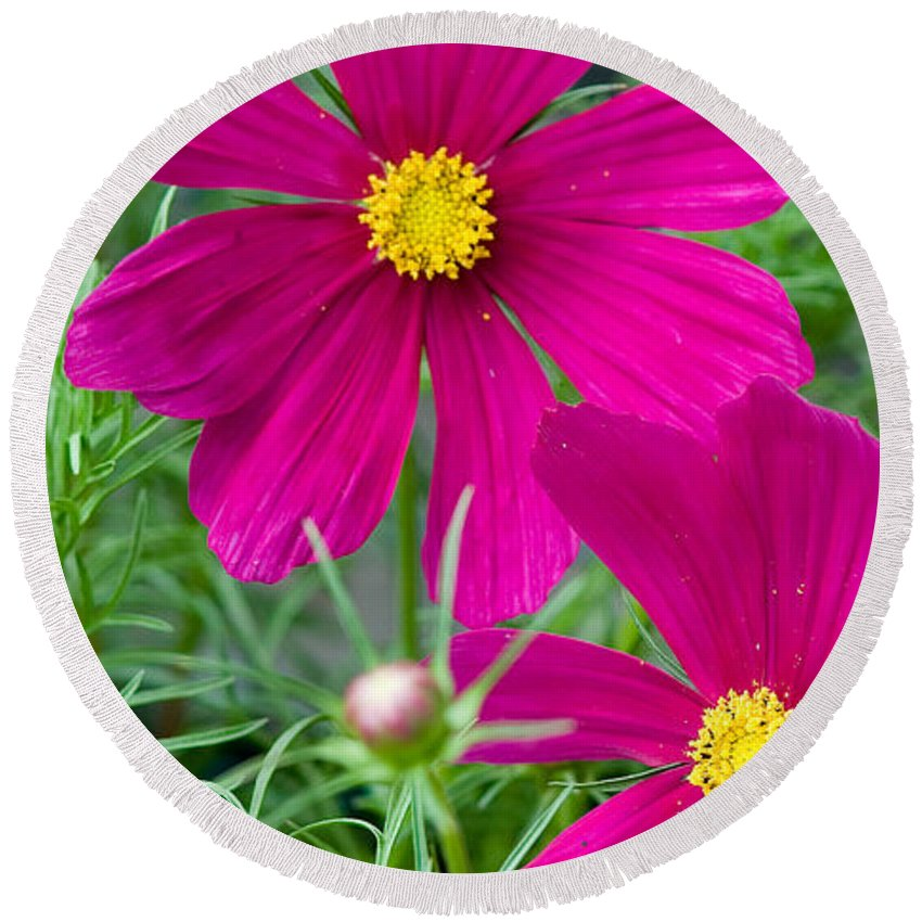 Pink Round Beach Towel featuring the photograph Pink Flower by Michael Bessler