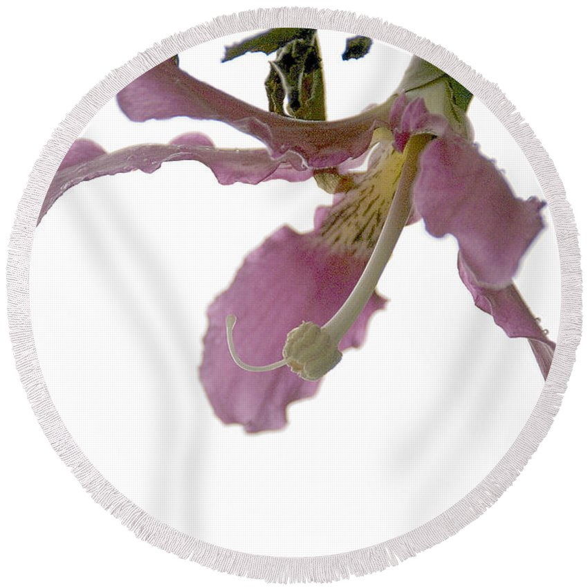 Flower Round Beach Towel featuring the photograph Pink Flower by Vladi Alon