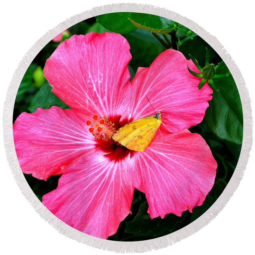Hawaii Round Beach Towel featuring the photograph Pink Hibiscus by Brittany Horton