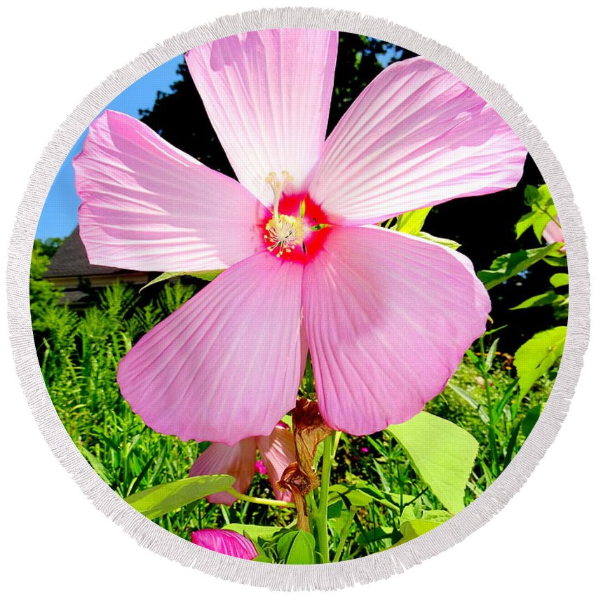 Nature Round Beach Towel featuring the photograph Pink Hibiscus by Ed Weidman