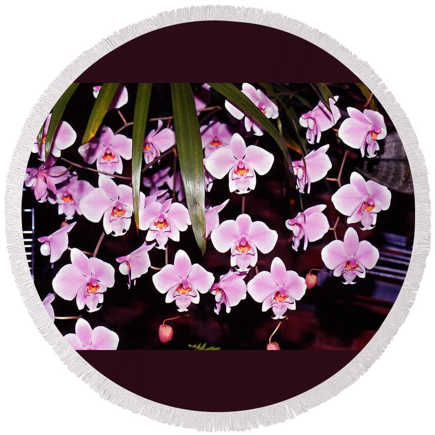 Flowers Round Beach Towel featuring the photograph Pink Little Orchids by Susanne Van Hulst