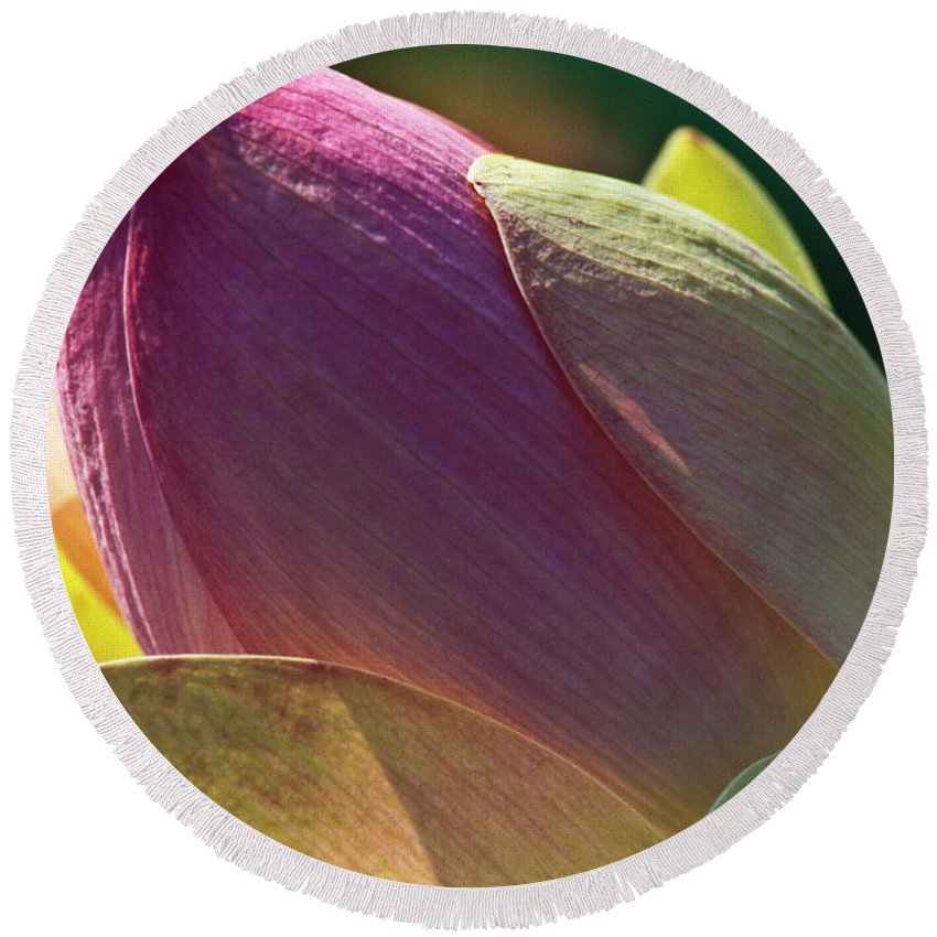 Nature Round Beach Towel featuring the photograph Pink Lotus Bud by Heiko Koehrer-Wagner
