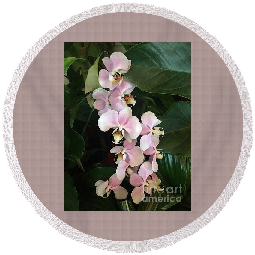 Art Round Beach Towel featuring the photograph Pink Orchids by Jeannie Rhode