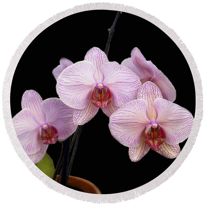Flowers Round Beach Towel featuring the photograph Pink Orchids by Kurt Van Wagner